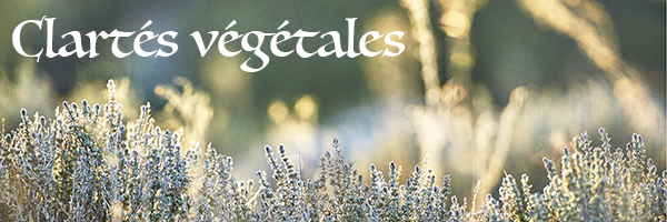 baniere_clartes-vegetales